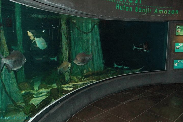 One of the large aquariums of the Oceanarium