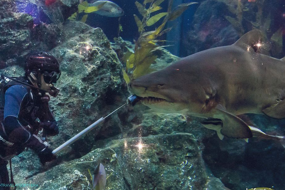 Shark feeding at Bangkok Oceanarium