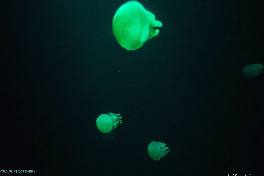 Highlighting jellyfish in chillout