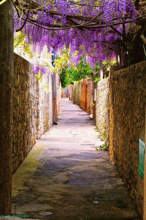 The flowering streets of Saint-Tropez