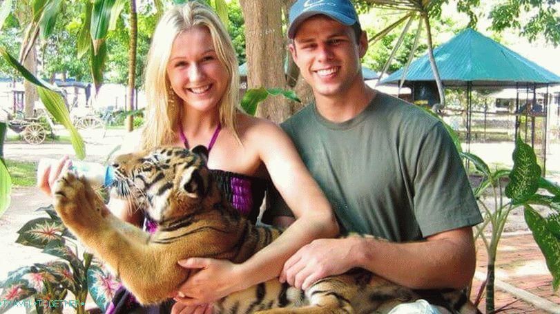 tigrovij_zoopark_i_akvarium_aquarium_tiger_zoo_na_samui_vt